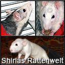 Shirias Rattenwelt